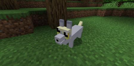 Скачать The Corgis для Minecraft 1.16.2